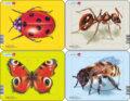 Hmyz - Mravec