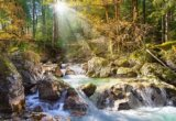 The forest stream -